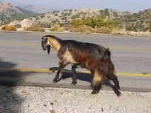 Mountain Goat Crete Royalty Free Stock Images