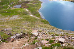 Mountain goat grazing. In an alpine lake Stock Images