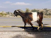Mountain Goat Royalty Free Stock Photos