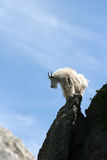 Mountain Goat on Harney Peak Spire Stock Images