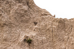 Mountain goat on a hillside Royalty Free Stock Photos