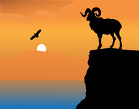 Mountain Goat On A Rock Royalty Free Stock Images