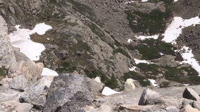 Mountain goats in the alpine zoom out. A zoom out of mountain goats  in the high country stock footage