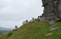 Mountain goats. Royalty Free Stock Photography