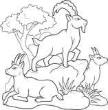 Mountain goats family  Royalty Free Stock Photo