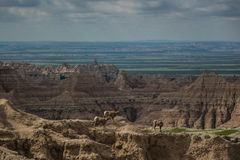 Mountain goats, pinnacles, buttes and spires, Badlands National Park, SD Stock Images