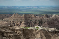 Mountain goats, pinnacles, buttes and spires, Badlands National Park, SD Royalty Free Stock Photos