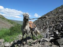 Mountain, Goats, Rock, Sky royalty free stock photography