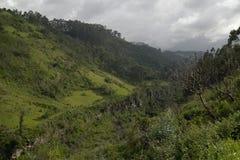 The mountain gorge Stock Image