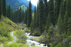 Mountain gorge Royalty Free Stock Photography