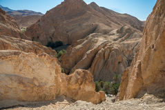 Mountain gorge with palm trees in the desert. Deep mountain gorge with palm trees in the desert. Photo without effects Stock Images