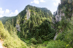 Mountain in the gorge of Rhodope Mountains, abundantly overgrown with deciduous and evergreen forest Royalty Free Stock Photos