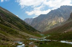 Mountain gorge with river and horses Stock Image