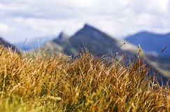 Mountain grass. Grass growing in high altitudes with mountains in background royalty free stock image