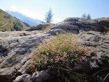 Mountain grassland. Grassland on Grossglockner in Austria stock images
