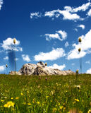 Mountain green fields. A mountain green meadow with fluctuating  yellow flowers and a blue sky (with soft clouds) in the sky. This picture is taken on the Alps Stock Photos