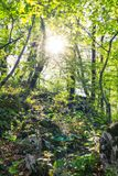 Mountain green forest. Sunlight passes through tree branches stock images
