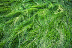 Mountain green grass details background Royalty Free Stock Images