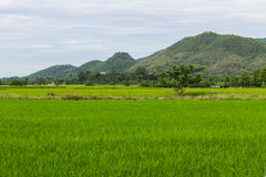 Mountain and green rice field in Thailand Royalty Free Stock Images