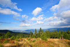 Mountain green spruce forest under white clouds Stock Photo