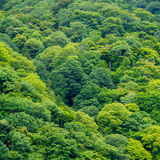 Mountain green tree forest deep jungle. Stock Image