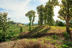 Mountain and green tree view,Mountain with gold teak Stock Photo