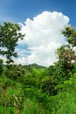Mountain and green tree view,Mountain with gold teak Royalty Free Stock Images
