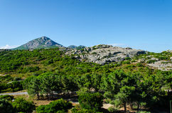 Mountain green trees. In Corsica royalty free stock photo