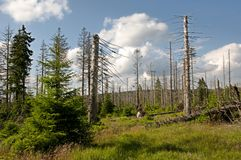 Mountain Harz,Germany Royalty Free Stock Image