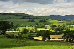 Mountain hay fields, Cumbria Stock Images