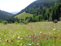 Mountain hay meadows in the Gyimes region Transylvania Royalty Free Stock Photo