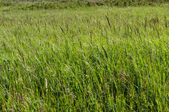 Mountain herbage. Wild grass. Mountain herbage in East Kazakhstan. Beautiful landscape Royalty Free Stock Photos
