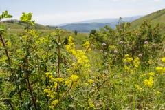 Mountain herbage. Wild grass. Mountain herbage in East Kazakhstan. Beautiful landscape Stock Photo