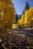 Mountain Highway and Aspens Royalty Free Stock Photo