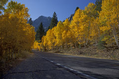 Mountain Highway and Aspens Stock Photo