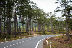 The mountain highway with pine trees in Dalat, Vietnam Royalty Free Stock Photo