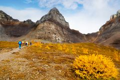 Mountain Hiking in the Canadian Rockies. Hikers walking along the base of Pinnacle Mountain among the golden Larch trees toward the ascend to Sentinel Pass at stock photos