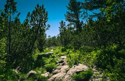 Mountain hiking road way across the pine forest and rocks. Amazing European Alpen mountain landscape, hiking trail leads through. The woods stock images