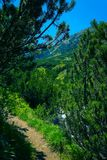 Mountain hiking road way across the pine forest and rocks. Amazing European Alpen mountain landscape, hiking trail leads through. The woods stock photos