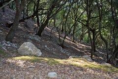 Mountain hiking terrain. Mountain hiking terrain above Alaro, Majorca, Balearic islands, Spain Royalty Free Stock Photo