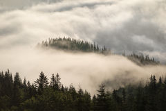 Mountain hills covered with fog in summertime Royalty Free Stock Photos