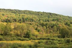 Mountain hillside with tiers of trees and fields of goldenrod. Horizontal aspect Stock Photo