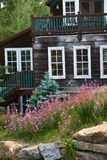 Landscaping with wild flowers around the home. Mountain home with Aspen Trees and wild flowers around the garden royalty free stock images