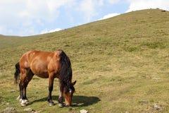 Mountain horse Stock Image