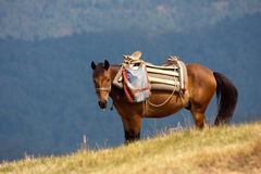 Mountain horse. Horse in the mountains (Montenegro, Europe Stock Photography