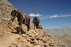 Mountain horse-riding Royalty Free Stock Image
