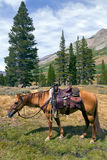 Mountain Horse under Saddle Royalty Free Stock Images
