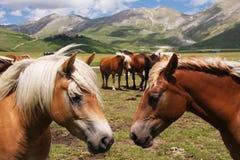 Mountain horses Royalty Free Stock Image