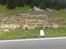 Mountain hut with animals grazing sheep . Stock Photos