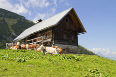 Mountain hut and cattle Royalty Free Stock Photography
